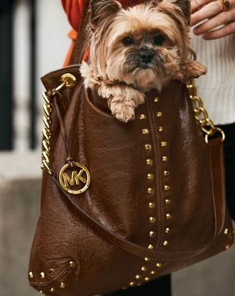 Michael Kors and a Yorkie, what more could you want.  LOL