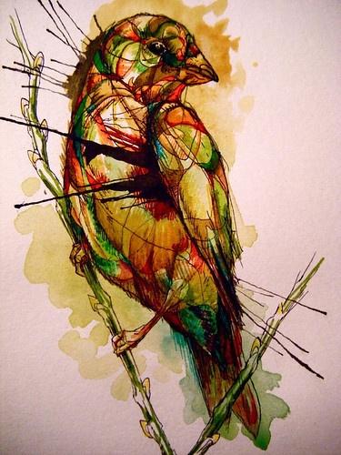 birds by abby diamond illustration birds art