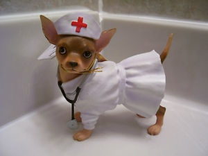 If you hit the call bell and this one comes tearing in, you are in trouble. : Hospital Things, House Miniatures, Nurse Dog, Pet Nurses, Hospital Pet, Nurse Humor, Nurse Nightingale, Nurse Me, Dollhouse Special