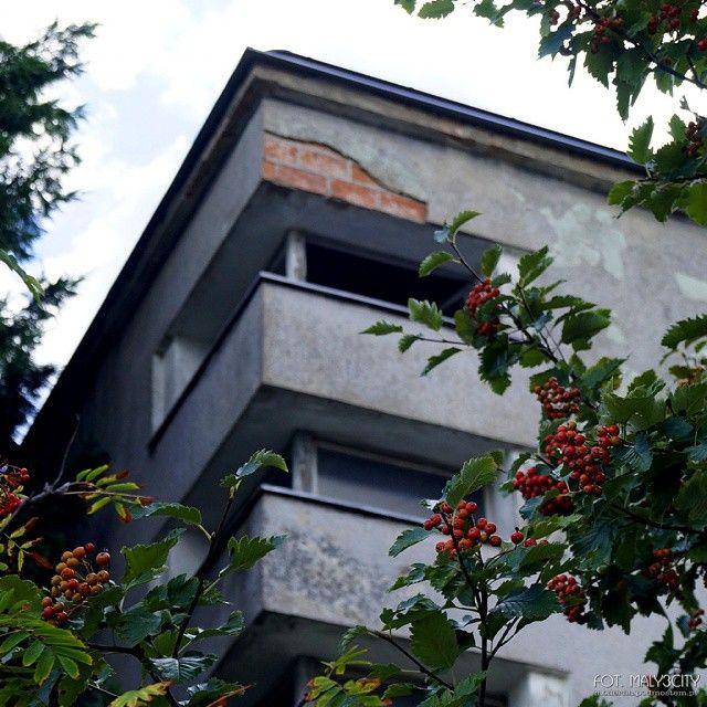#Gdynia #PłytaRedłowska ul. Kasztelańska #modernizm_gdyni #architektura #modernizm #jarzębina #architecture #modernism #rowan #rowanberry #jesień #autumn #maly3city