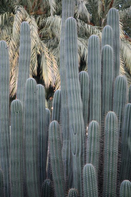 49 Best Images About Cacti Succulents On Pinterest Gardens Beach Wedding Favors And Cactus