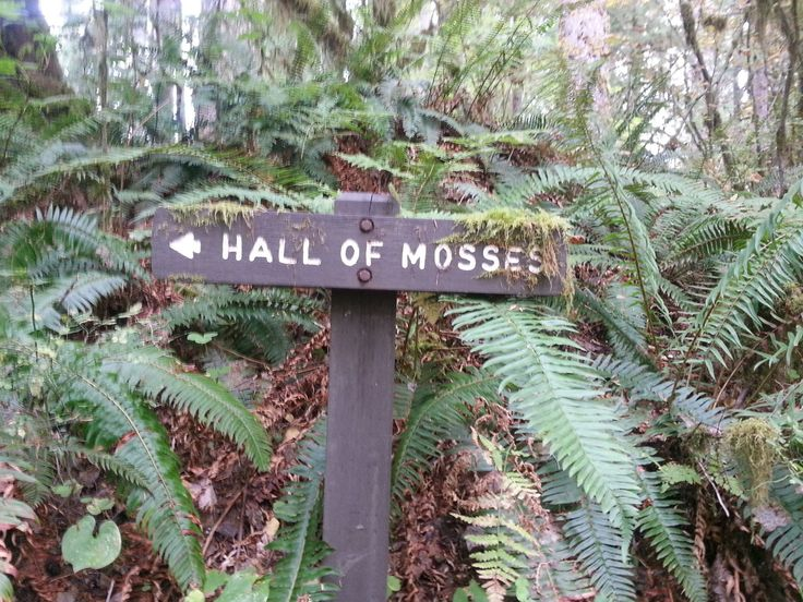 The Hall Of Mosses Trail In Washington Is Like Something From A Dream