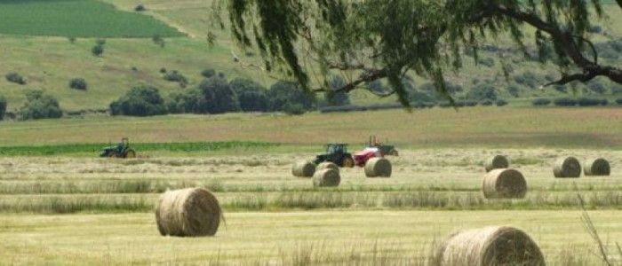 Making hay just outside Clarens.