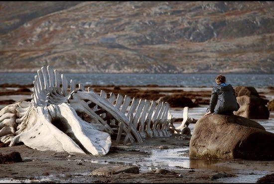 5 motivos para você assistir a Leviatã, o filme que está colocando a Rússia de cabeça para baixo|Rodrigo da Silva