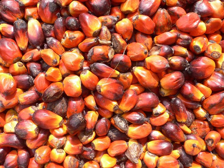 Put Down the Palm Oil: Planet-Friendly Alternatives For Your Home: http://onegr.pl/1eOBTt9
