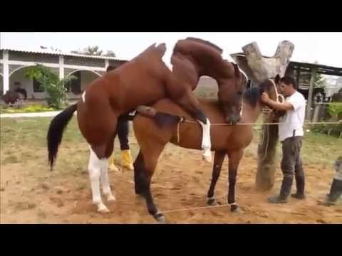 NEW animal sexxyyy crazy videos - funny video 2014 Part43 http://omgthisissocute.com/new-animal-sexxyyy-crazy-videos-funny-video-2014-part43/ #AppaloosaHorse, #ArabianHorse, #Breeding, #Crazy, #FunnyVideo2014, #Hor, #HorseFacts, #HorseGames, #HorseNames, #HorsePictures, #NEWAnimal, #PicturesOfHorses