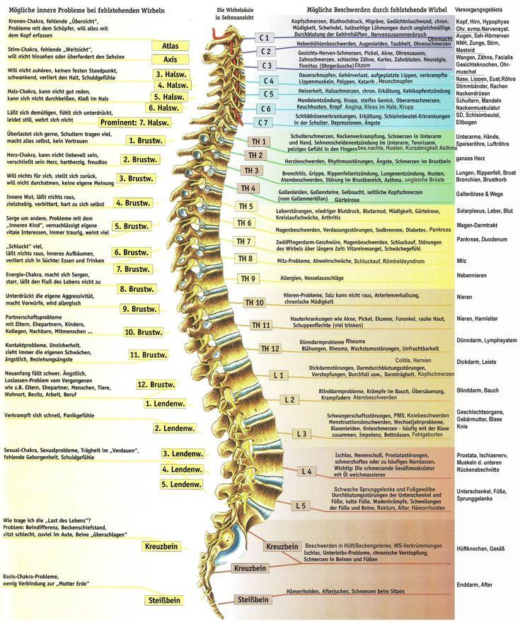 Die wahre Ursache von Schmerzen: Wie die Wirbelsäule mit anderen Organen verbunden ist - ☼ ✿ ☺ Informationen und Inspirationen für ein Bewusstes, Veganes und (F)rohes Leben ☺ ✿ ☼