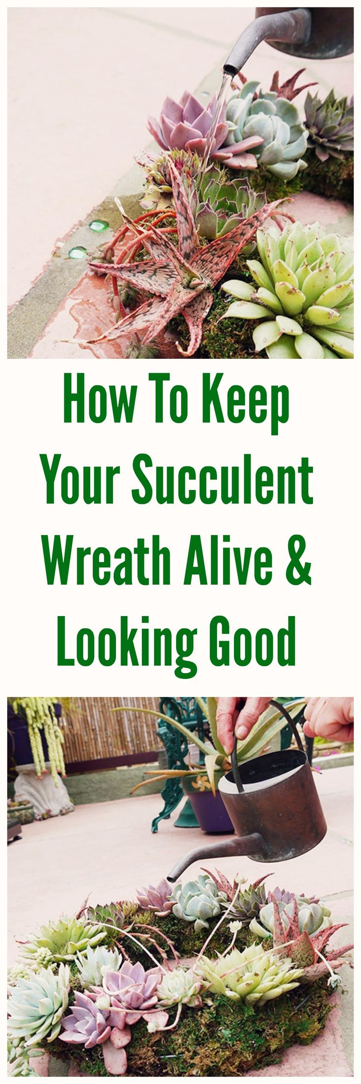 Here's what you need to know to keep your beautiful living succulent wreath alive & looking great.