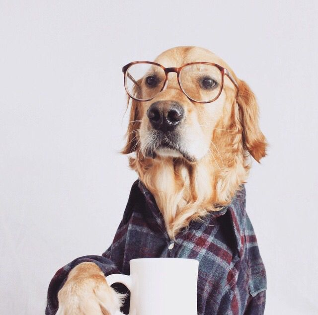 13 best Dogs With Glasses images on Pinterest
