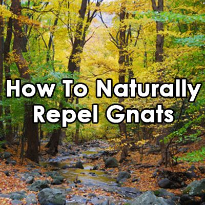 How To Naturally Repel Gnats...plant lavender, lemon balm or scented geraniums; a saucer with vinegar and dish soap, and more.