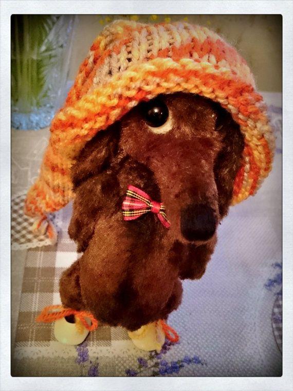 NEW NEW  The cleverest Teddie dachshund chocolate от Cosydachshund