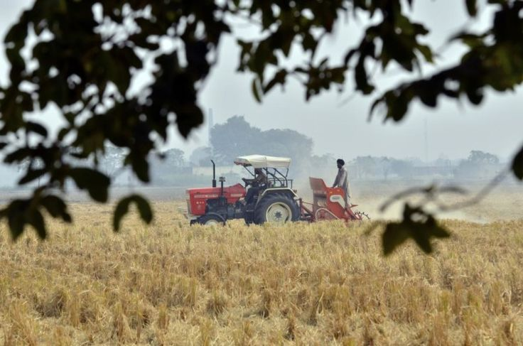 the image shows the agriculture in india