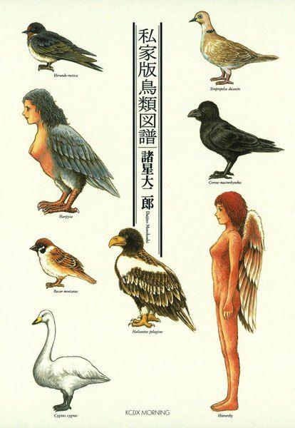 私家版鳥類図譜 諸星大二郎 講談社