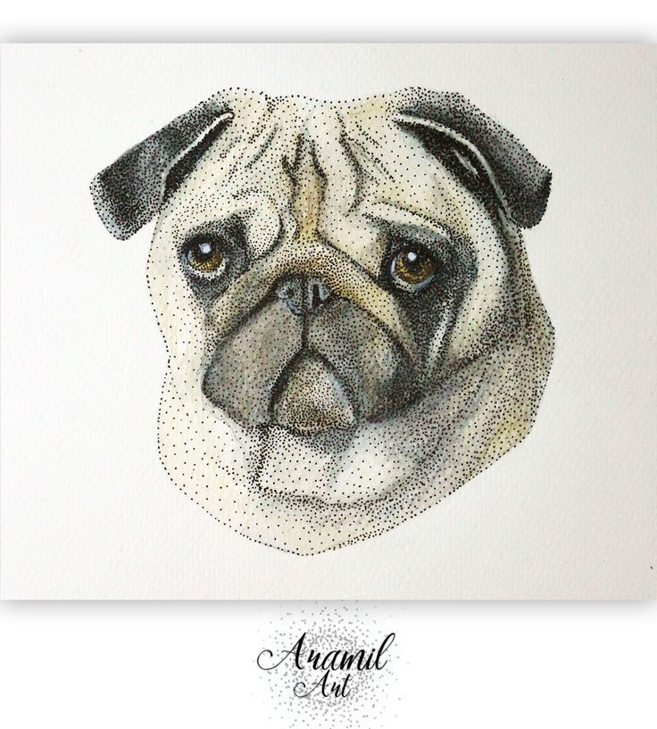 Pug drawing, created by using about a thousand dots and colored with watercolour pencil. Art by Petra Jánosi. Come and check on FB. :) www.facebook.com/aramilart
