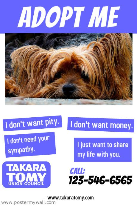 dog adoption flyer template - 36 best flyer ideas images on pinterest kitty cats