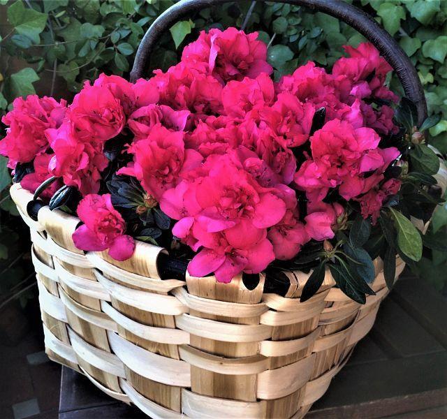 Las 25 mejores ideas sobre cestas de flores en pinterest - Cestas decorativas ...