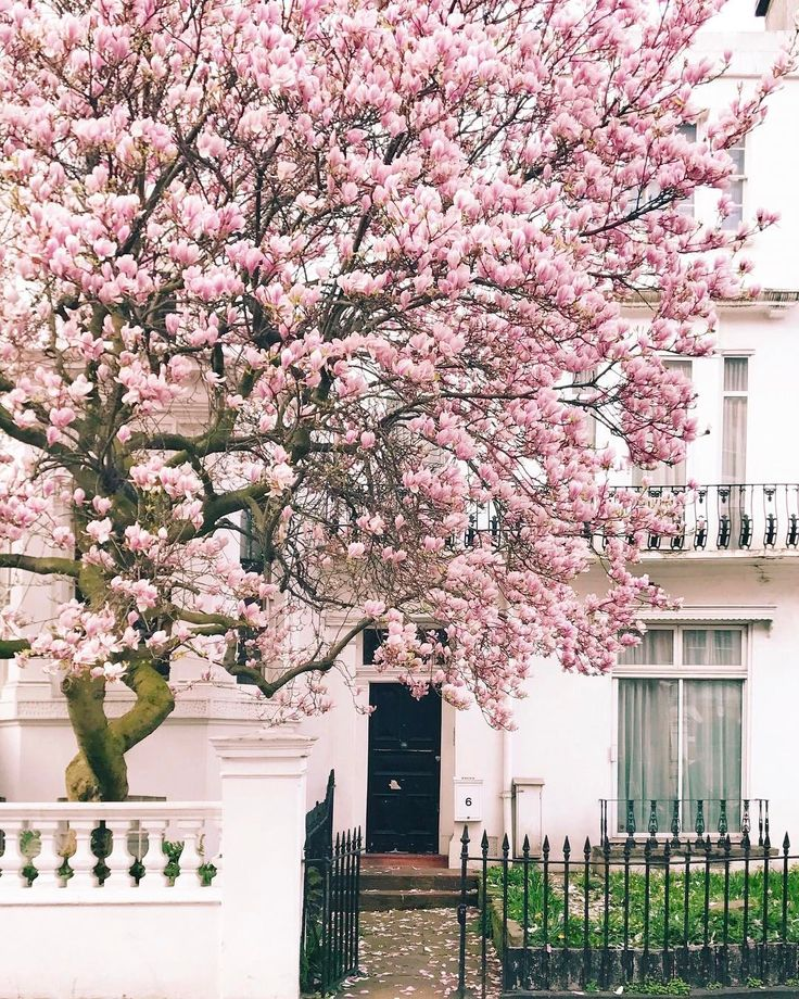 So in love with the magnolia around London.  📷 by Mairin