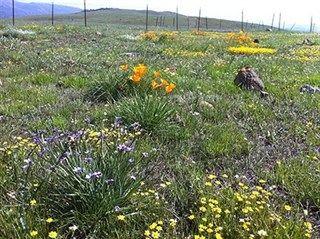 Los tiempos de floración cambian con la pérdida de especies