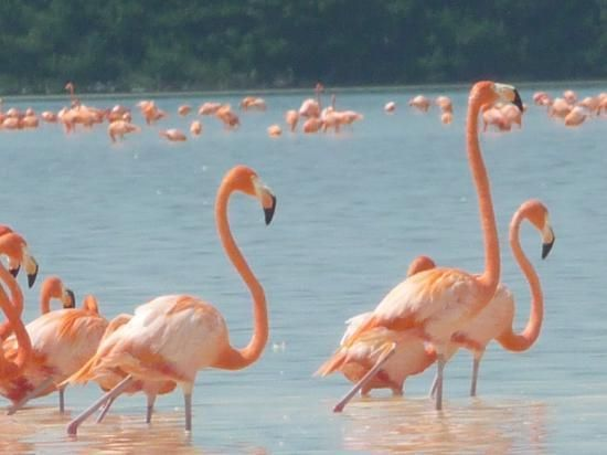 Progreso Beach, near Merida, Mexico. This is one of the world's largest nesting grounds for the pink flamingo.