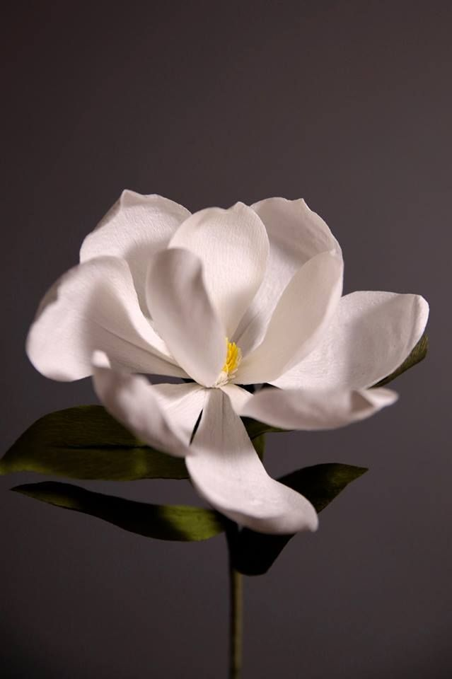 Handcrafted Crepe Paper Magnolia Grandiflora by Papetal