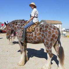 Safari, next year, im doing this to my horse