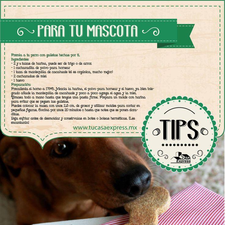 Premia a tu perro con galletas hechas por ti. Tu Casa Express #Mascotas
