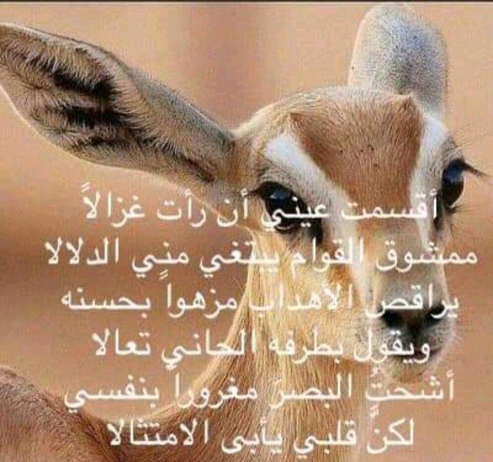 Pin By ابورهف القرشي On أرشيف Islamic Art Animals Giraffe