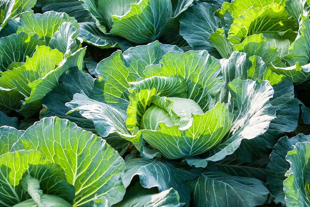 Grow your own vegetables good enough to eat with our guide to what to sow and plant this spring:  http://bit.ly/22s1gPg