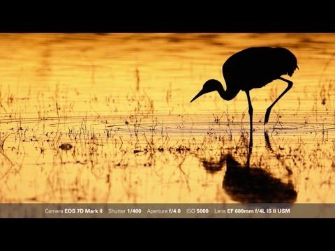 Canon: Bird Photography with Arthur Morris: One Shot and AI Servo AF - YouTube