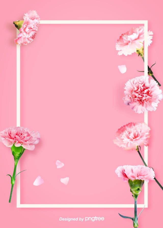 Simple Warm White Border Carnation Background Picture In 2020 Flower Backgrounds Floral Border Design Spring Flowers Background