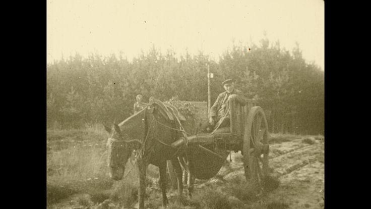 Video: OISTERWIJK | De bosschen en vennen van Oisterwijk (Noord-Brabant) (1917) - Gevireerde film over het natuurgebied bij Oisterwijk, dat dankzij de Vereniging tot Behoud van Natuurmonumenten voor het publiek behouden is gebleven.