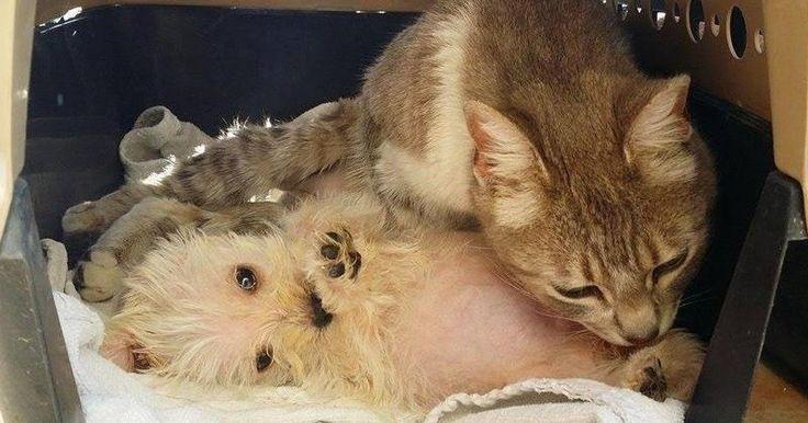 Attaquée par des chiens, cette chatte a perdu ses bébés mais est devenue la mère adoptive d'un chiot