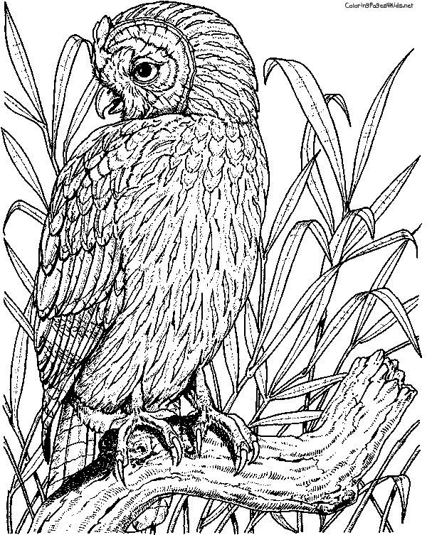 Hard Adult Coloring Pages Printable Owl Tone