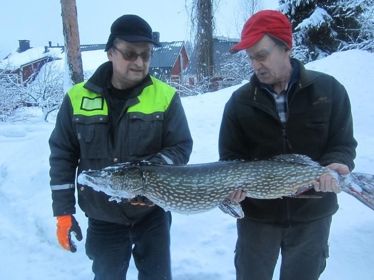 Pike 10,2 kg, Kettujärvi Lake 12.02.2013