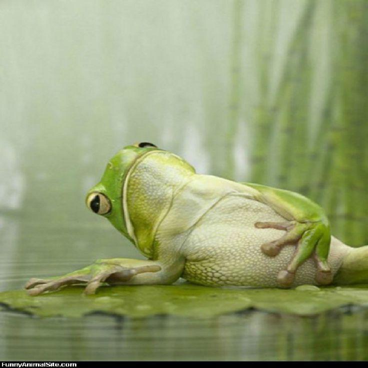 Поменять, жаба прикольные картинки с надписями