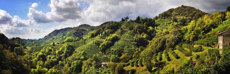 Le colline del Conegliano Valdobbiadene!