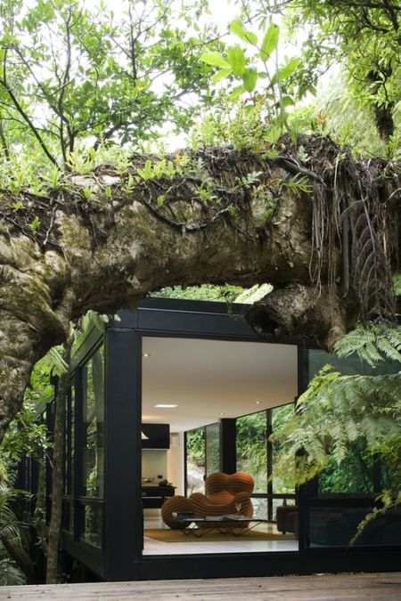 tree house cabin forest Kaori trees architecture wood, tate New Zealand.