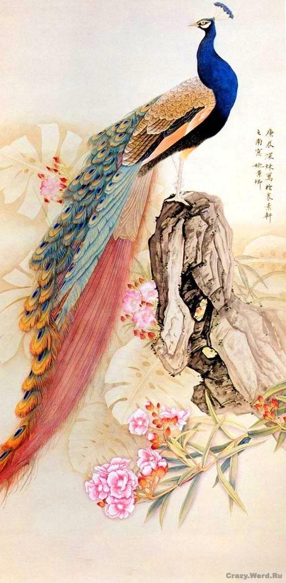 Добрый день! Хочу представить Вам подборку акварельных работ красивых птиц. Среди них есть работы известной художницы Сьюзен Бордет, а также работы (к моему сожалению не известных мне) китайских художников. Итак, любуемся и вдохновляемся на создание своих райских птичек!