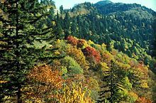 The autumn colors of the northern hardwood canopy near Newfound Gap give way to the dark-green spruce-fir canopy as altitude increases - Smoky Mountains. My paradice.