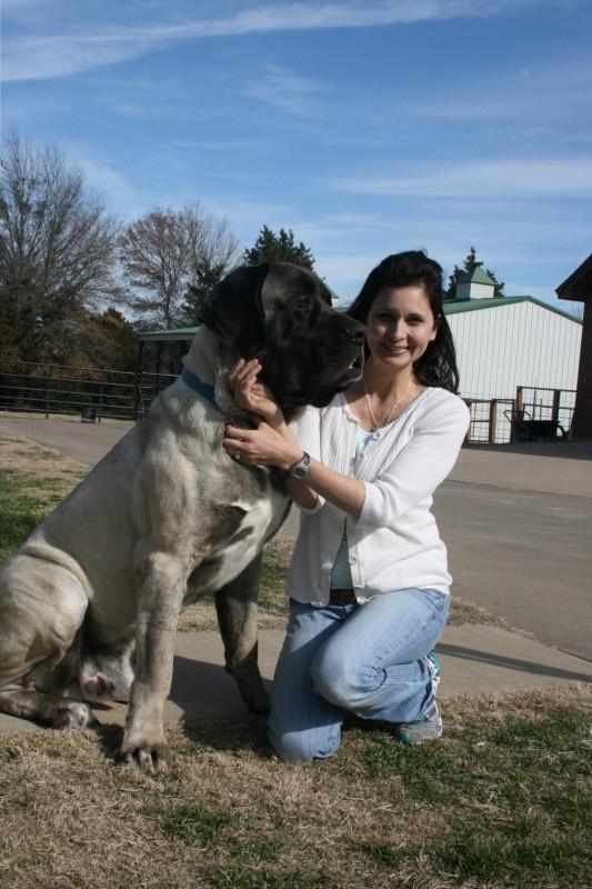 205 lb American Mastiff