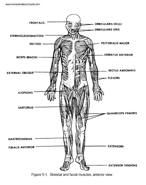 90 best Anatomy & Physiology images on Pinterest