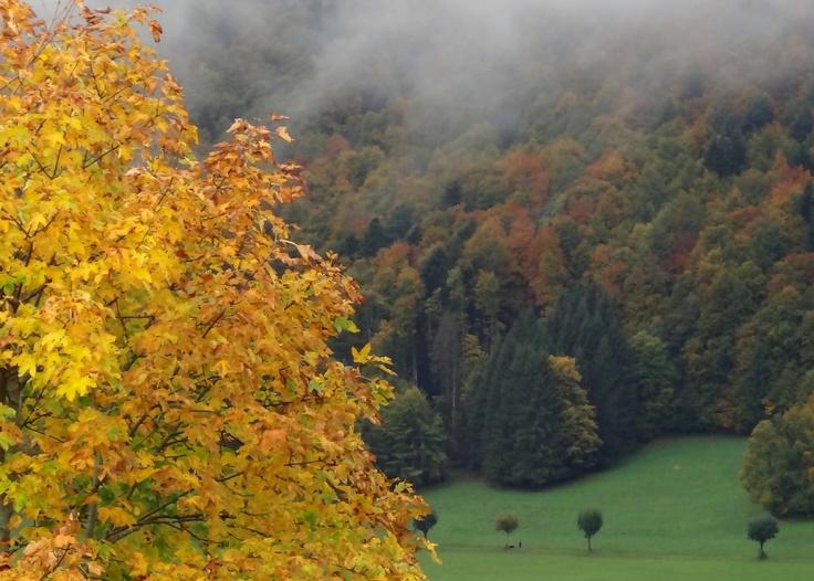 Automne, automne 2012