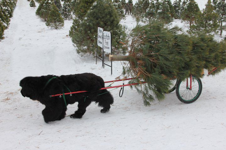 Who wouldn't want a tree delivered by Ben?