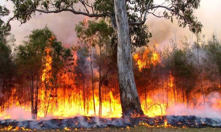 https://flic.kr/p/dP8oys | bushfire