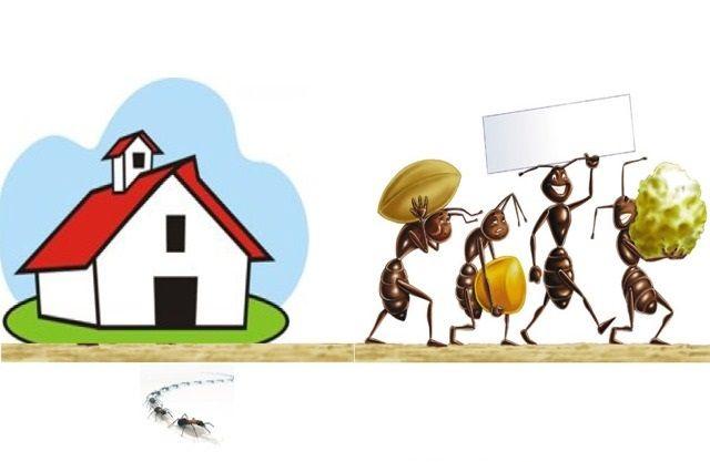 allontanare formiche