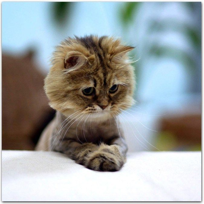20 Cute Praying Cats With Images Cat Pics Cats Cute Animals