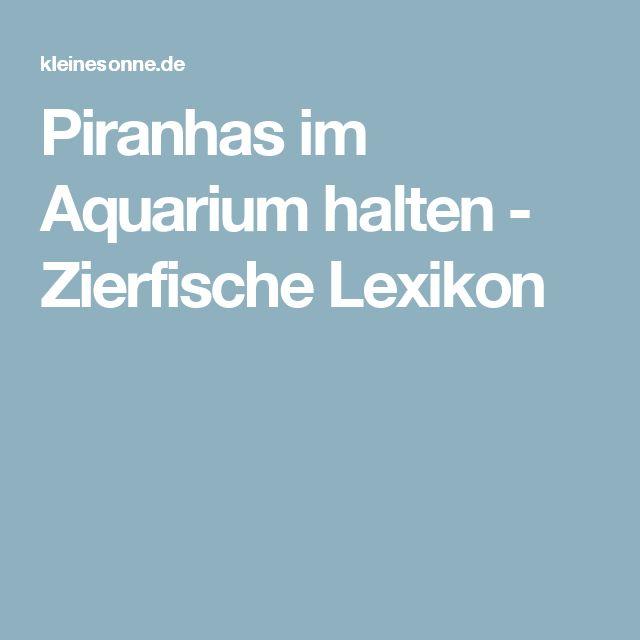 Piranhas im Aquarium halten - Zierfische Lexikon
