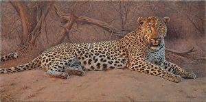 Killing Time de Peter Stewart Oil ~ 50cm x 100cm