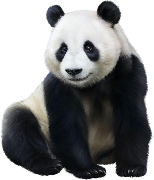 Картинка панды на прозрачном фоне