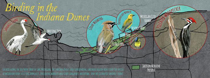 Birding in the Indiana Dunes by Melissa Washburn